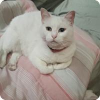 Adopt A Pet :: Olivia - Sherman Oaks, CA