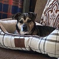 Adopt A Pet :: Davey - Avon, OH