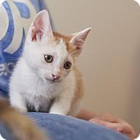 Adopt A Pet :: Periwinkle - Huntsville, AL