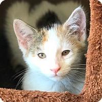 Adopt A Pet :: Linda - Island Park, NY