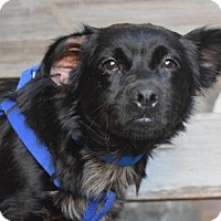 Adopt A Pet :: Berta - Los Angeles, CA