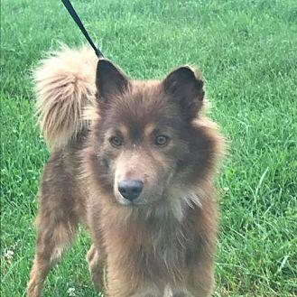 Australian Shepherd Mix Dog for adoption in New York, New York - Malcolm