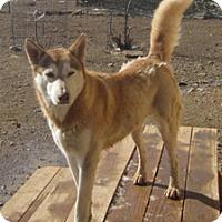 Adopt A Pet :: Lena - Santa Fe, NM