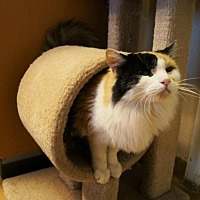 Adopt A Pet :: Freya - Tempe, AZ