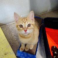 Adopt A Pet :: Rachael - Belleville, MI