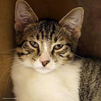 Adopt A Pet :: Chupacabra - Tucson, AZ