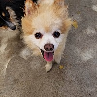 Adopt A Pet :: Monty - Fountain Valley, CA