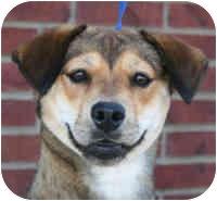 Shepherd (Unknown Type)/Beagle Mix Dog for adoption in Marion, Arkansas - Meghan