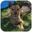 Photo 2 - Chihuahua Mix Dog for adoption in San Clemente, California - JAVIER