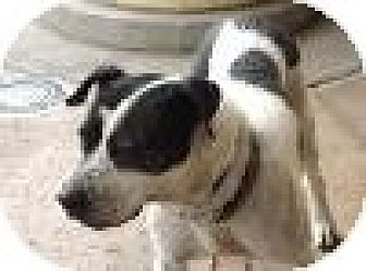 Pit Bull Terrier Mix Dog for adoption in Las Vegas, Nevada - Fugie