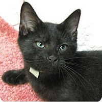 Adopt A Pet :: Ranger - Centerburg, OH