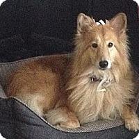 Adopt A Pet :: Chloe - Indiana, IN