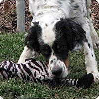 Adopt A Pet :: Jake Blues - Columbus, OH