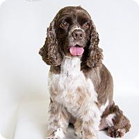 Adopt A Pet :: Leo III - Rancho Mirage, CA
