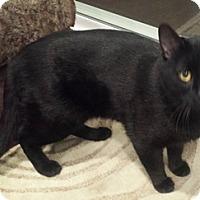 Adopt A Pet :: Dude - North Highlands, CA
