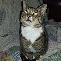 Adopt A Pet :: Little Miss - Chesapeake, VA