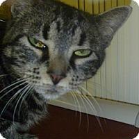 Adopt A Pet :: Penelope - Hamburg, NY