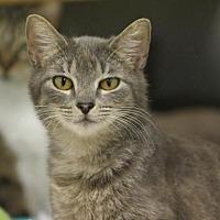Adopt A Pet :: Frack - McKenzie, TN