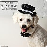 Adopt A Pet :: Rex-Pending Adoption - Omaha, NE