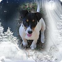 Adopt A Pet :: Bella - Crowley, LA