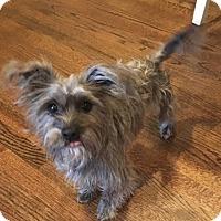 Adopt A Pet :: Coco - Atlanta, GA