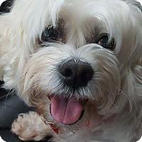 Adopt A Pet :: Claire - Troy, MI