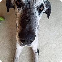 Adopt A Pet :: Oreo - Oswego, IL