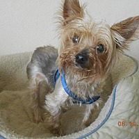 Adopt A Pet :: barkley - haslet, TX
