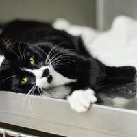 Adopt A Pet :: Gretta - Starkville, MS