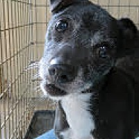 Adopt A Pet :: Bonnie - Kingston, TN