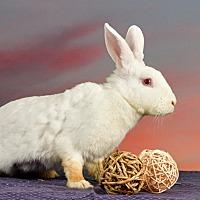 Adopt A Pet :: Wellsie - Marietta, GA