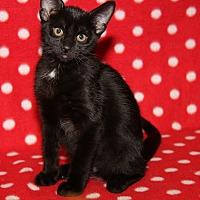Adopt A Pet :: Chloe - Marietta, OH