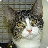 Adopt A Pet :: Gloria - Green Bay, WI