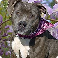 Adopt A Pet :: A wonderful companion for you - Sacramento, CA