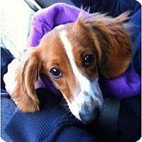 Adopt A Pet :: Charlie - Killingworth, CT