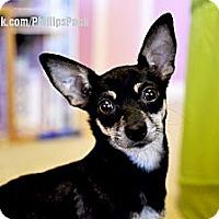 Adopt A Pet :: Mama Jeri - Colleyville, TX