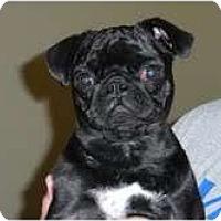 Adopt A Pet :: Gabby - Eagle, ID