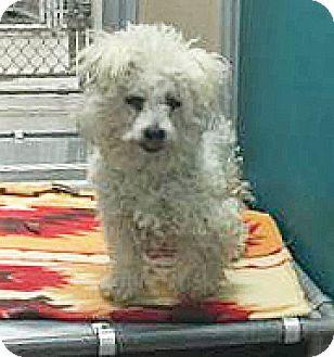Terrier (Unknown Type, Small) Mix Dog for adoption in Spokane, Washington - Luna