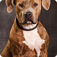Adopt A Pet :: Just Fab - DRD Program - Owensboro, KY