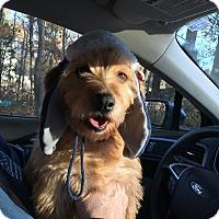 Adopt A Pet :: Buzz - Owensboro, KY