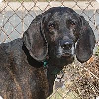 Adopt A Pet :: Adam - Elmwood Park, NJ