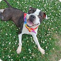 Adopt A Pet :: POGO - Cleveland, MS