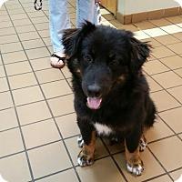 Adopt A Pet :: Bernie - Beacon, NY