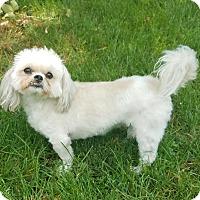 Adopt A Pet :: Berkly - Sheridan, IL