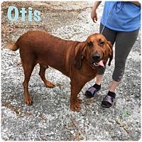Adopt A Pet :: Otis - Hartwell, GA