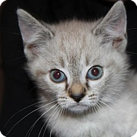 Adopt A Pet :: Tulip - Parker Ford, PA