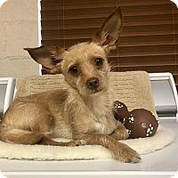 Adopt A Pet :: Trapper - Chino Valley, AZ