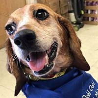 Adopt A Pet :: Cathy *Adopt or Foster* - Fairfax, VA