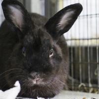 Adopt A Pet :: Wulf - Largo, FL