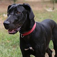 Adopt A Pet :: Dallas - Union, CT